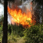 Лес горит в 3 км от Поспелковой, на другом берегу реки