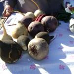 Серовские садоводы-огородники приступили к сбору урожая
