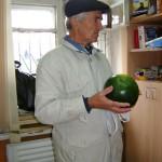 Серовский агроном вырастил арбузы, не уступающие астраханским