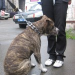 """Через соцсети серовчанка продала четырех несуществующих собак. Фото: архив газеты """"Глобус""""."""