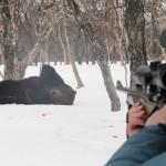 Медведь напал на карпинского охотника на территории Веселовского лесничества