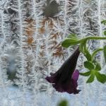 Учитель из Красноглинного победил в международном фотоконкурсе