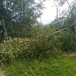 Ураганный ветер в Серове сломал тополя и повредил линии электропередач