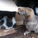 Серовчанки искали хозяев бездомным щенкам в социальных сетях