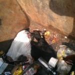 Неизвестный в Серове изуродовал дворняжку и выбросил ее умирать на помойку (Фото)