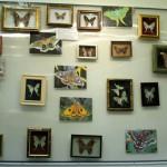В Серовском историческом музее проходит выставка «Планета насекомых» (Фото)