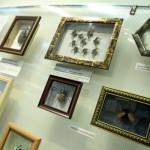 В Серовском историческом музее проходит выставка «Планета насекомых»