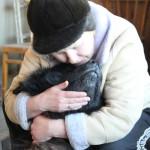 За одну неделю в Серове в мучениях погибли три породистых пса. Собак кто-то травит?