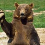 В Серове может появиться еще один инспектор по охране животного мира