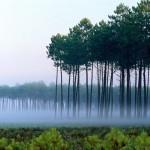 Лесопользователи Серова задолжали за аренду лесных участков почти 19 миллионов рублей