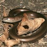В Серове садоводы обнаружили змей. Ядовитых или нет – пока неизвестно
