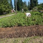 В Серове в коллективном саду разгорелся конфликт вокруг спорного земельного участка