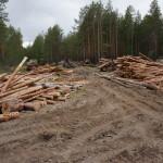 Серовские лесопользователи гасят долги перед Департаментом леса