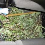 В последнее время Серовским межрайотделом свердловского УФСКН  изъято 450 гр. маковой соломки, возбуждено 4 уголовных дела. Фото: Госнаркоконтроль