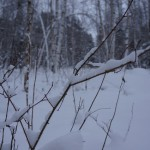 """В труднодоступных для человека местах снег лежит нетронутый.  Фото: Екатерина Баязитова, """"Глобус"""""""