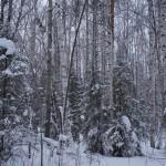 """При дневном свете зимняя тайга прекрасна. Фото: Екатерина Баязитова, """"Глобус"""""""