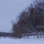 """Берег реки Лозьвы, противоположный поселку Новый Вагиль. Фото: Екатерина Баязитова, """"Глобус"""""""