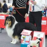 Серовчане просят помочь найти хозяина и собаку