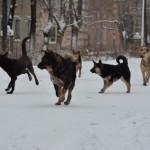 """Бездомные собаки в Серове. Фото: архив """"Глобуса""""."""