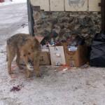 В Серове отлов бродячих собак начнется в ближайшие дни
