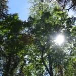 Сквозь кроны деревьев пробивается солнце