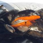 В Серове продают зараженные бактериями рыбные пресервы и копчености