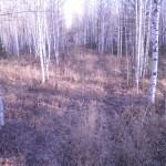 В околомарсятских лесах найдены останки жителя Серовского района, который ушел встречать инопланетян