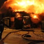 """Животные были благополучно спасены из огня. Фото: Константин Бобылев, """"Глобус""""."""