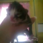 В Серове в честь депутата Дмитрия Ионина, который жил в бараке, назвали... котенка