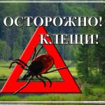 Фото: профилактика-астрахань.рф.