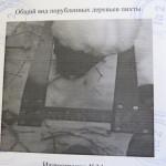В Серове заготовители пихтовых веников и березовых метелок стали фигурантами уголовных дел