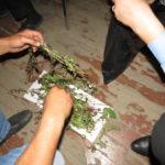 Выявлено 11 преступлений, связанных с незаконным оборотом наркотиков растительного происхождения: 4 из них  связаны с незаконным хранением, 7- со сбытом наркотических веществ. Фото: полиция Серова