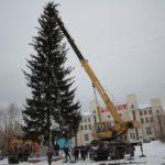 """Самый популярный размер елочек среди серовчан -- до 2 метров. Фото: Константин Бобылев, """"Глобус""""."""