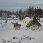 """Кладбище села Филькино. Фото: архив """"Глобуса""""."""