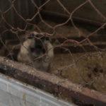 """По истечению 21 дня пребывания в вольерах, отловленных собак усыпляют... Фото: Константин Бобылев, """"Глобус""""."""