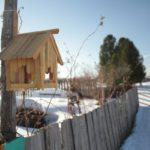 """На участке Ирины и Дмитрия растут 10 кедров, каждый год собирают урожай шишек. Дом находится на берегу озера. Красивая природа, чистый воздух -- рай. Фото: Константин Бобылев, """"Глобус""""."""