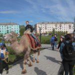 """Любители верховой езды могли прокатиться на двугорбом верблюде. Фото: Константин Бобылев, """"Глобус"""","""