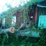 Тополь убрали только в четверг, 8 июня. Фото: Алексей Потапов.