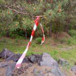 """Обрывки заградительной ленты на деревьях. Фото: Константин Бобылев, """"Глобус""""."""