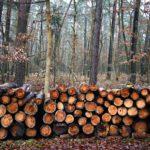 rubka-lesa