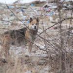 """Собаки испуганы, людей близко к себе не подпускают. Фото: Константин Бобылев, """"Глобус""""."""
