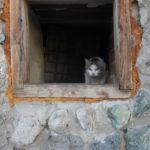 """Один из котиков вышел на клич, но был очень напуган и озлоблен. Фото: Мария Чекарова, """"Глобус""""."""