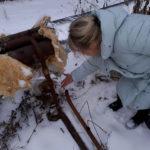 """Труба-спутник была обрезана коммунальщиками. В результате трубы с холодной водой перемерзли. Фото: Мария Чекарова, """"Глобус""""."""