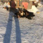 """Татьяна Лапшина сообщает, что убиты были именно эти щенки. """"Одного из семи только успели пристроить"""", - переживает женщина. Фото предоставлено Татьяной Лапшиной."""