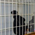 Время до судебного разбирательства горе-муж проведет под арестом в изоляции от общества. Фото предоставлено Валерием Горелых.