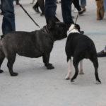 """Не только хозяева могли обзавестить новыми знакомствами, но и собачки. Фото: Мария Чекарова, """"Глобус""""."""